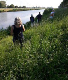 Plandelen langs het kanaal door Voorne